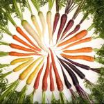 rauwe worteltjes, jouwlijflijn